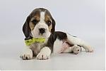 Beagle-teef-1973-2.JPG