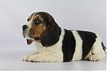 Beagle-teef-8000-1.JPG