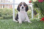 Beagleavendreliege-reu-6230-1_28Kopie29.jpg