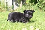 Chihuahua-reu-7322-1.JPG