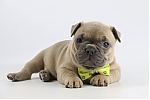 Franse-bulldog-teef-1841-1.JPG