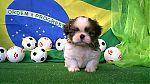 baby_boomer_wiki_0456.jpg