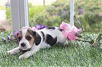 beagle-man-4761b_28Kopieren29.jpg