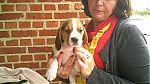beagle-man1329.jpg