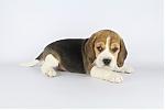 beagle_man_7683_28329.JPG