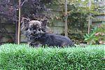 chihuahua-papa-mini.jpg