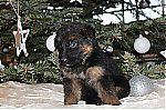 german_shepherd_rescue_7601.jpg